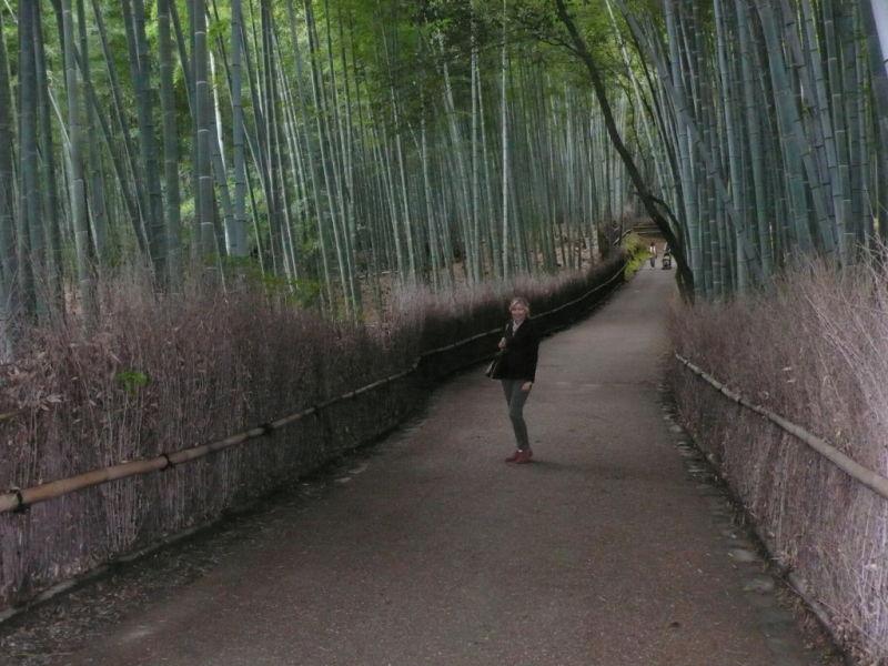 Japanese tourist attraction arashiyama kyoto bamboo forest