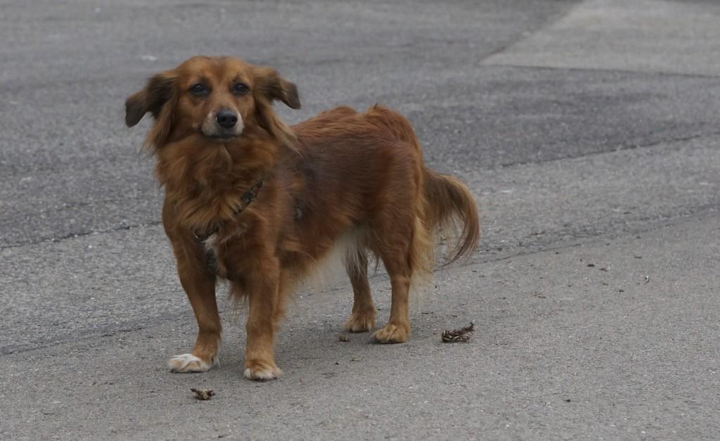 auburn dog in vienna