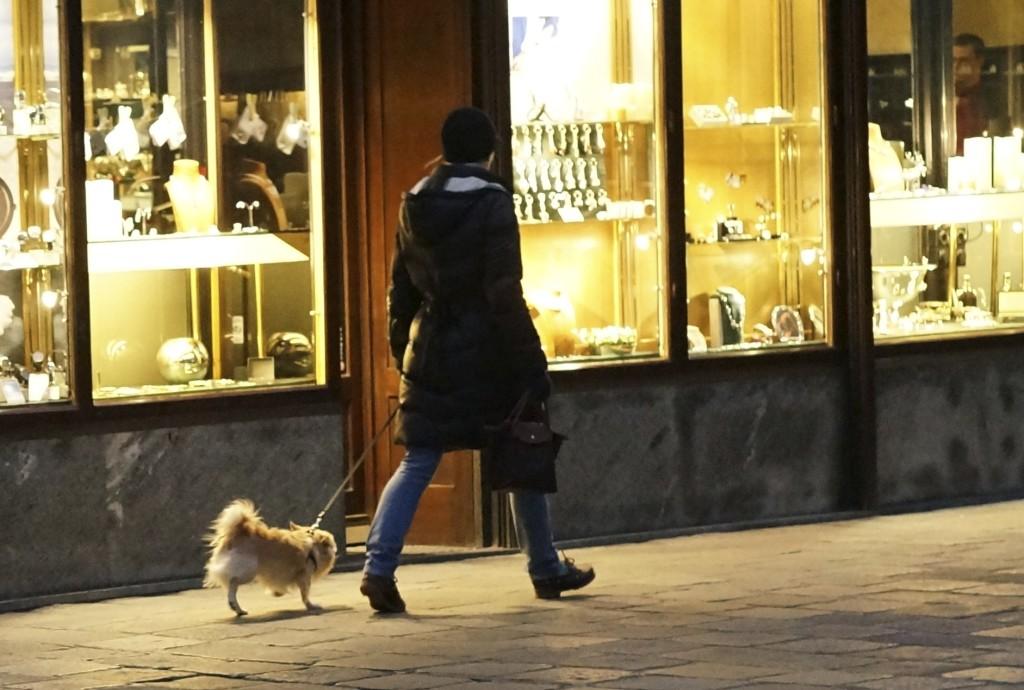 chihuahua on a walk