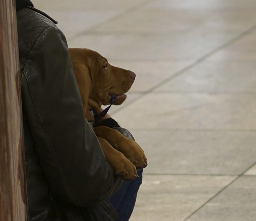 hound holding leash dog
