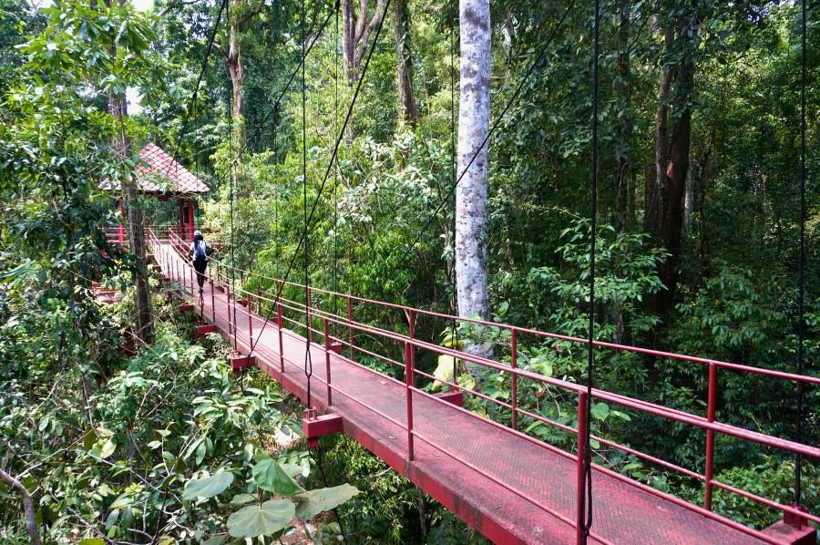 Trang Thailand botanical garden bridge