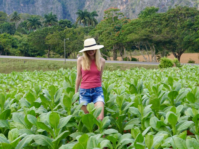 what wear tobacco fields cuba cut off denim shorts big sunhat