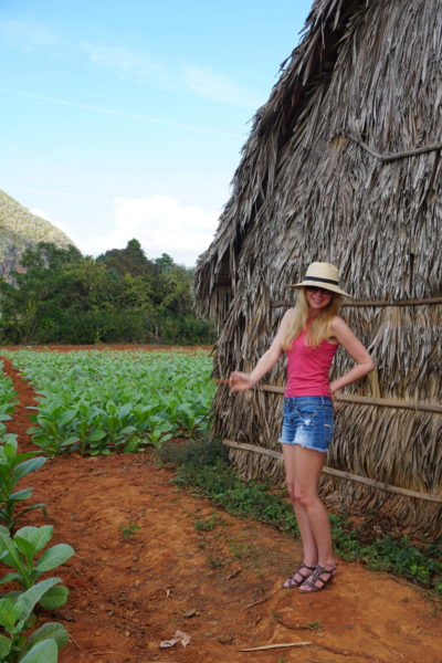 smoke cuban cigar vinales cuba visit tobacco fields