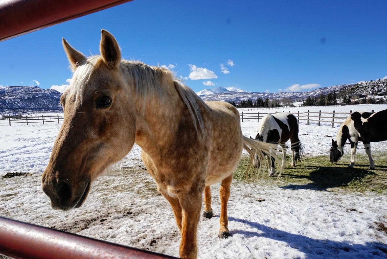 aspen snowmass ranch